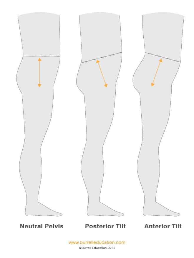 Pelvis Diagram-04 (1)